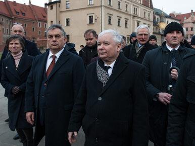 """""""Prawicowa Dyktatura"""". Kukła Kaczyńskiego po raz kolejny na paradzie w..."""