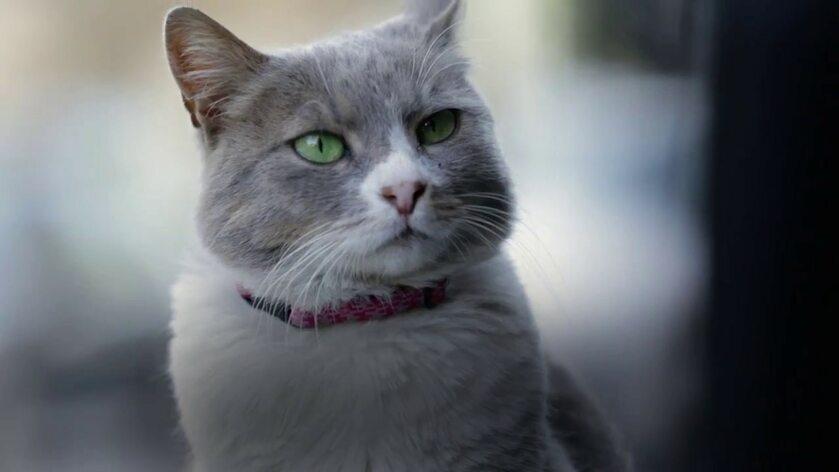 KEDI – fenomenalny dokument o stambulskich kotach najchętniej oglądanym filmem dokumentalnym w 2017 roku!