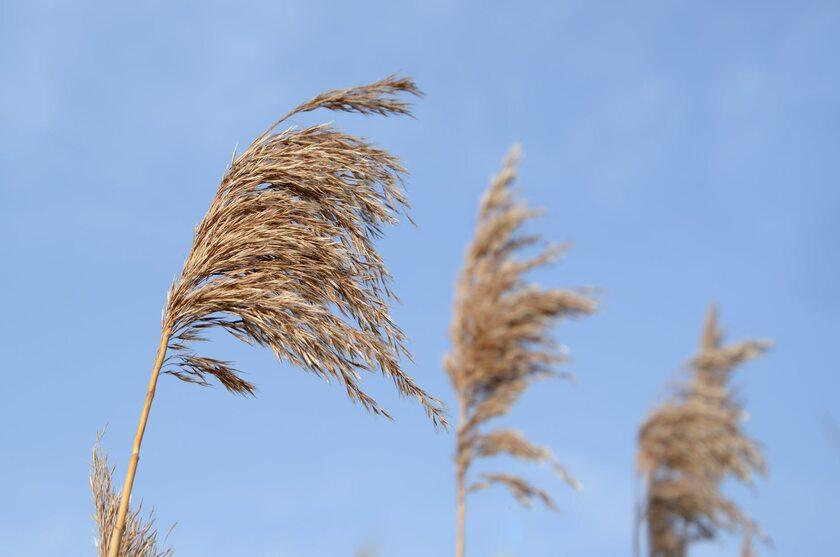 Wiatr, zdjęcie ilustracyjne