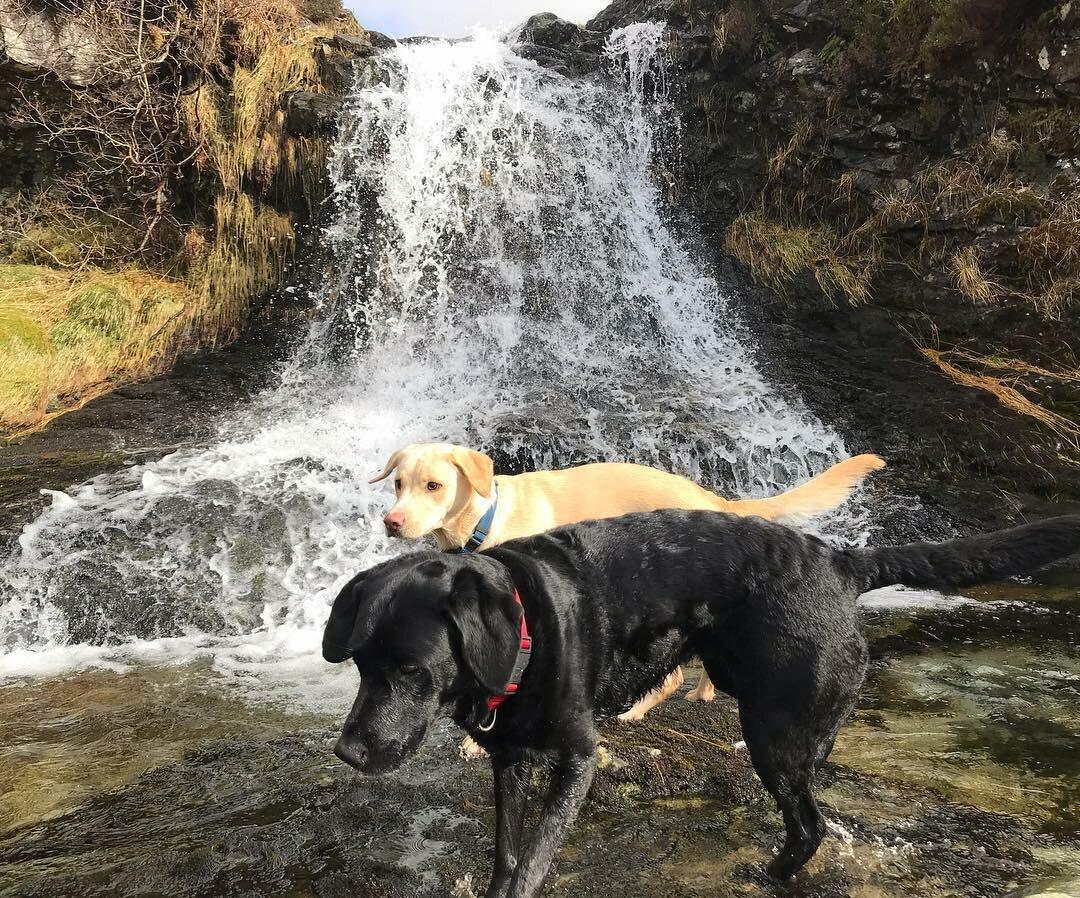 Olive i Mabel