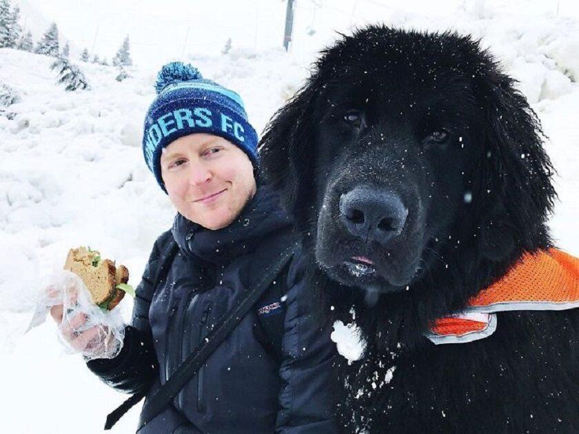 Pies rasy nowofundland
