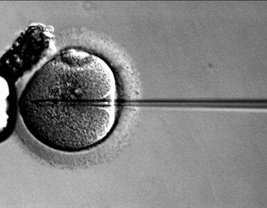 Nieoficjalnie: znane są szczegóły rządowego programu in vitro