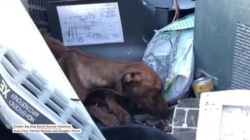 Uratowany szczeniak