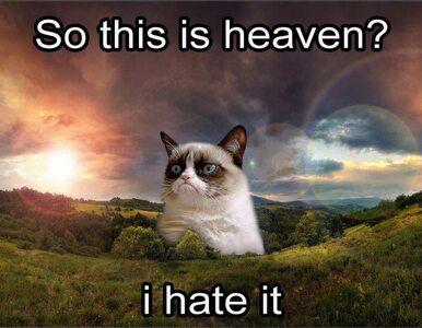 Odszedł Grumpy Cat. Zobaczcie pożegnalne memy upamiętniające bohatera...
