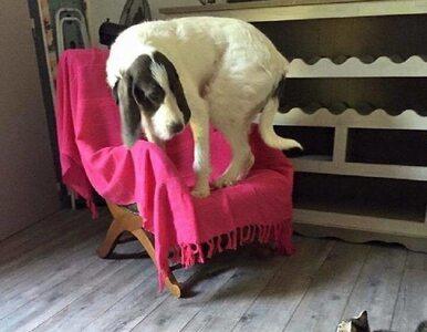 Psy potrafią bać się zadziwiających rzeczy. Te zdjęcia są na to...