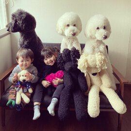 Dwoje dzieci i trzy gigantyczne pudle robią karierę w sieci