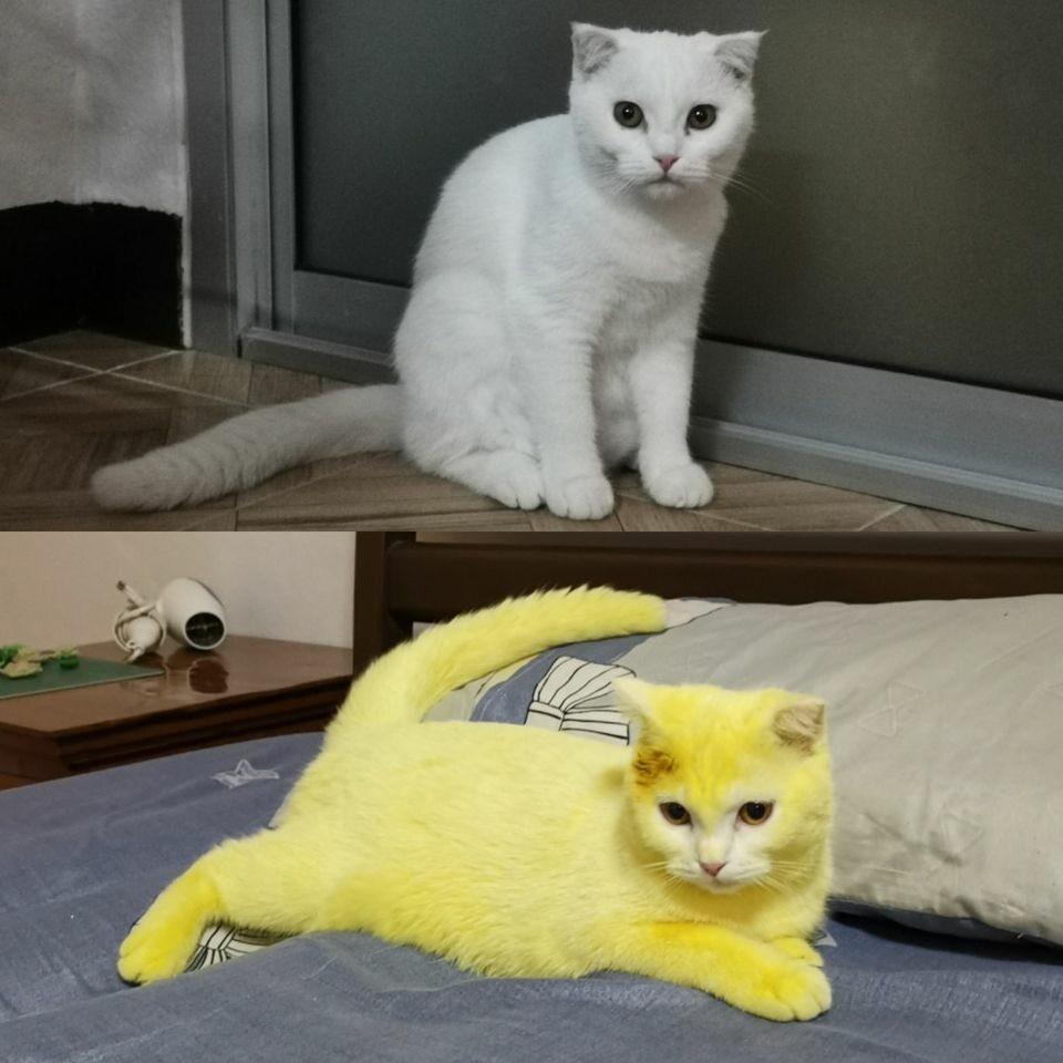 Ka-Pwong przed i po kurkuminowej kuracji