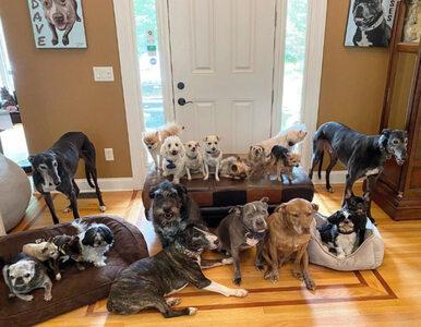 """Tak wygląda codzienność pary, która przygarnęła 20 psów. """"To szaleństwo"""""""