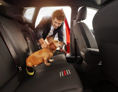 Kierowcy z psami w samochodach jeżdżą znacznie ostrożniej