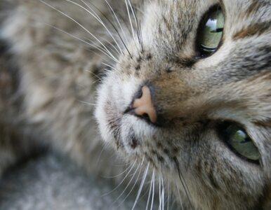 Karmili kotka wegańskim jedzeniem. Zwierzę prawie zmarło