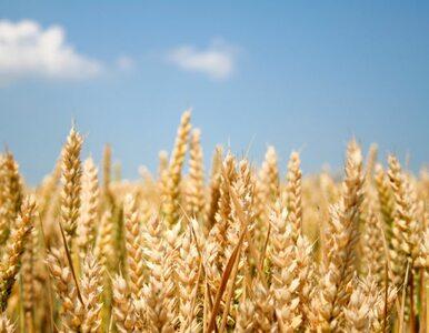Polscy rolnicy nawożą coraz więcej