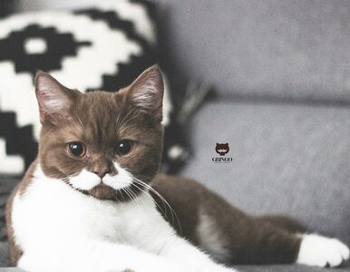 Miaukules Purr a'Lot wśród kotów! Poznajcie Gringo – gwiazdę Instagrama