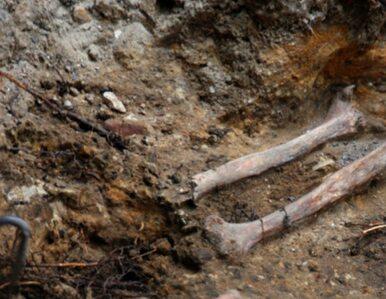 Polsko-rosyjski zespół archeologów badał syberyjskie kurhany