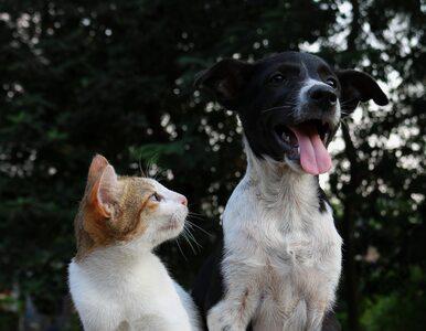Czy zwierzęta takie jak psy i koty mogą się zarazić koronawirusem?