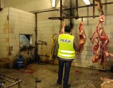 """Śledztwo ws. nielegalnych ubojni krów. """"Zostały naruszone przepisy..."""
