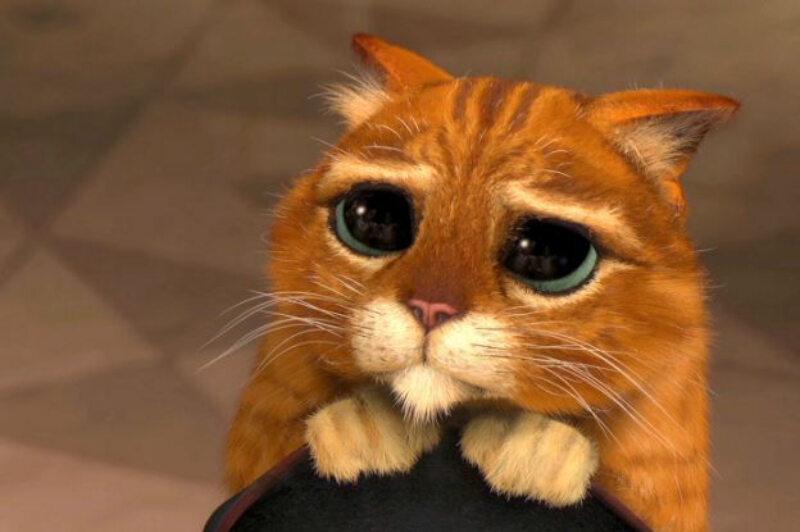 Tego kota znamy doskonale z filmu: