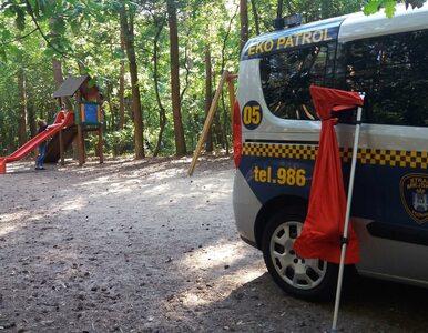 Poznań. Dzieci znalazły boa dusiciela na placu zabaw