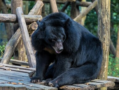 Dzikie zwierzęta wystawione na sprzedaż. Na Facebooku oferowano m.in....