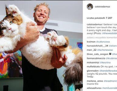 13 kilogramów futrzanej miłości. Poznajcie największego kota na świecie