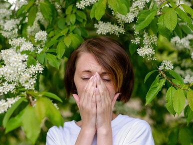 Alergolog: Wysokie stężenia pyłków w tym roku wyjątkowo wcześnie