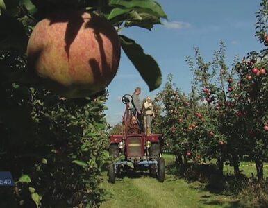 Owoc embarga. Rolnicy liczą straty