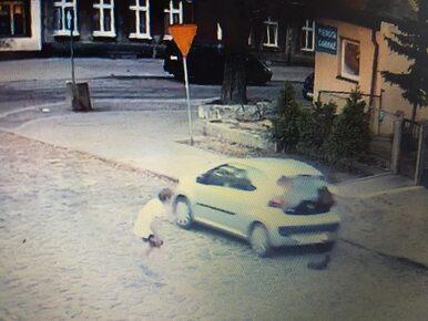 Gdańsk. Kierowca przejechał psa i odjechał. Na nagraniu widać rozpacz...