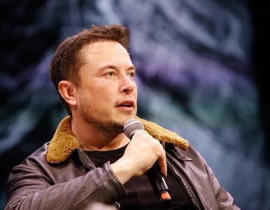 """""""Ok, poproszę milion"""". Elon Musk zafundował nam własnie ogromny las"""